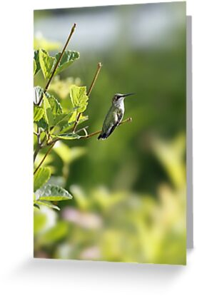 Hummingbird roosting greeting cards by naturesedge redbubble hummingbird roosting by naturesedge m4hsunfo