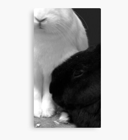 Toe to nose Canvas Print