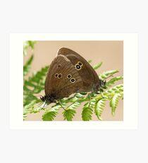 Mating Ringlet Butterflies Art Print