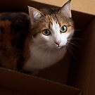 Portrait: Bel in box by Pat Heddles