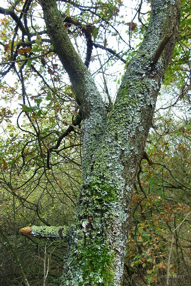 Tree with beautiful Lichens by ienemien
