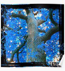 Blue Oak Tree Poster