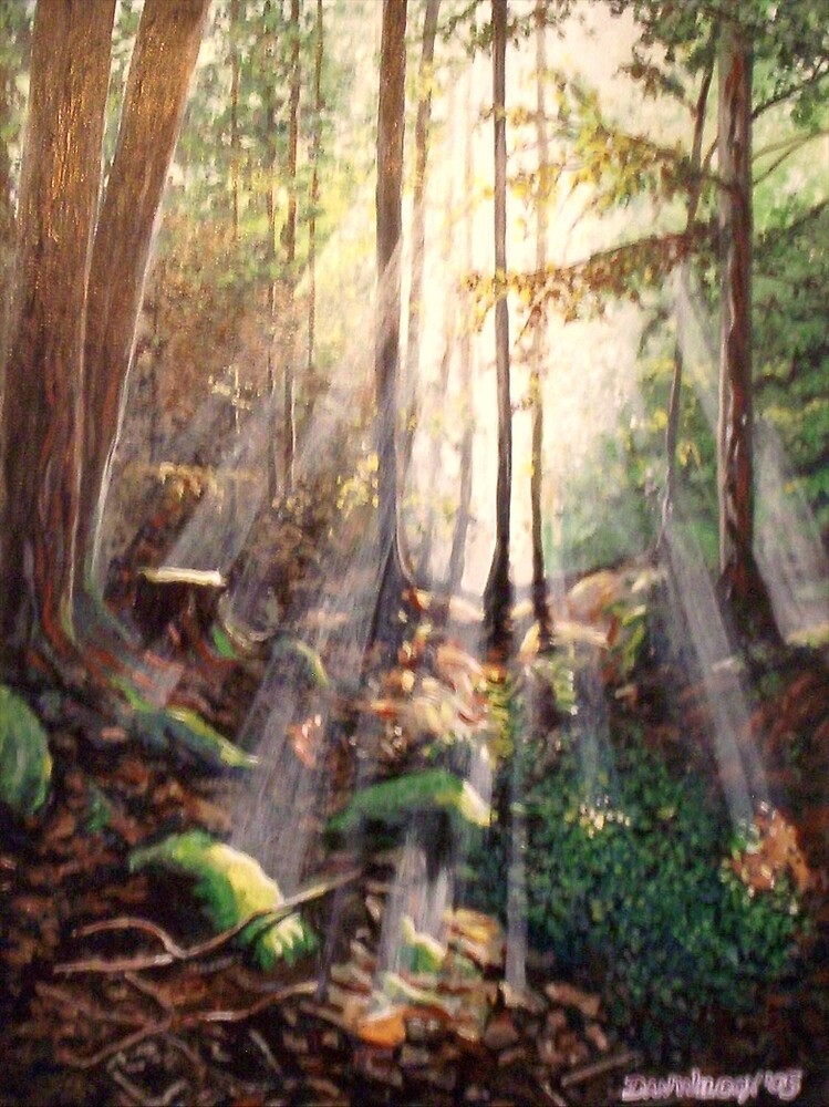 Sun streaming onto forest floor by Dan Wilcox