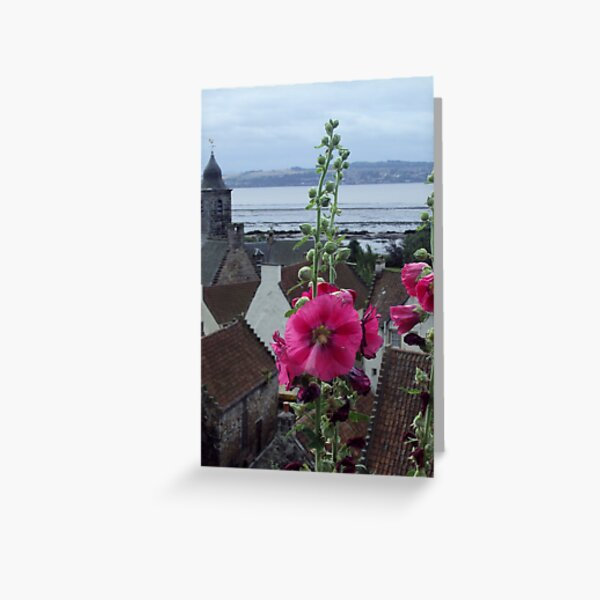 Culross Hollyhock Greeting Card