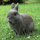 Billy the Rabbit von Michael John