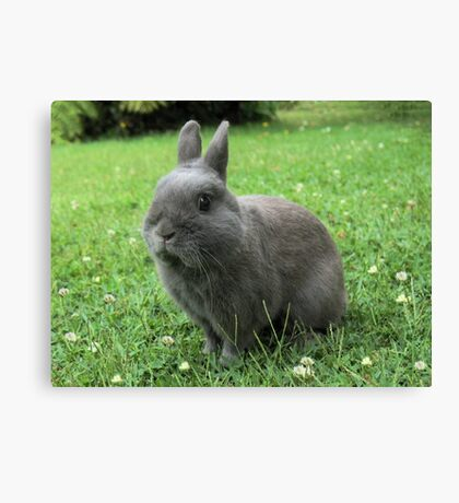 Billy the Rabbit Canvas Print