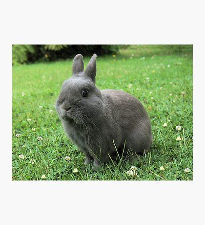 Billy the Rabbit Photographic Print