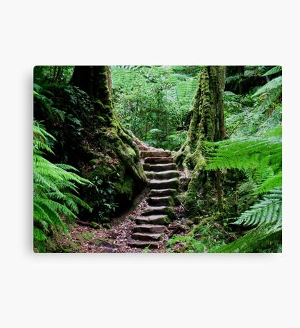 Rainforest Steps Canvas Print
