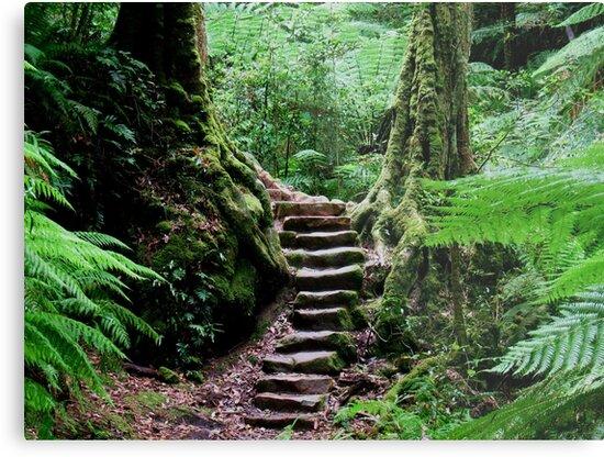 Rainforest Steps by Michael John