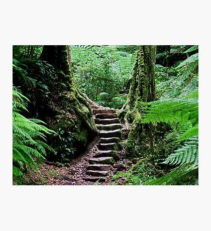 Rainforest Steps Photographic Print