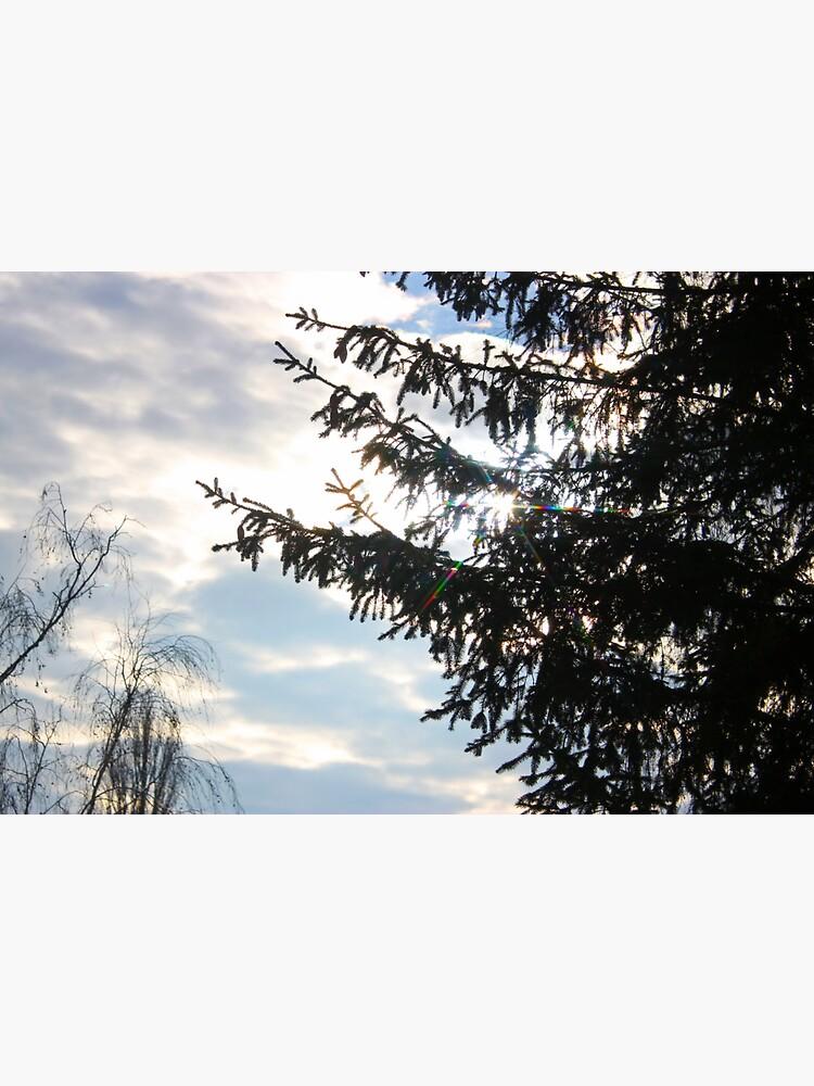 Sunny Spruce by Asaha17