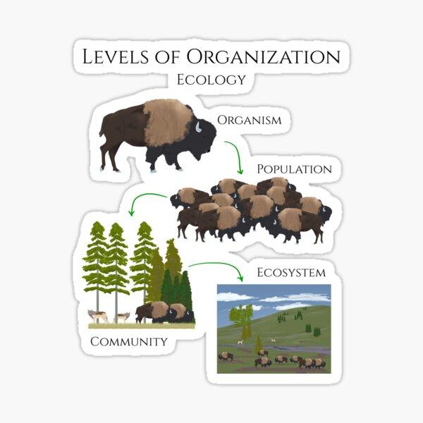 Levels of Organization, Ecology  Sticker