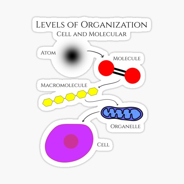 Levels of Organization, Cell and Molecular Biology Sticker