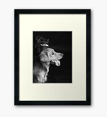 Retrievers Framed Print