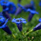 Blue Dancers by Avantgarda