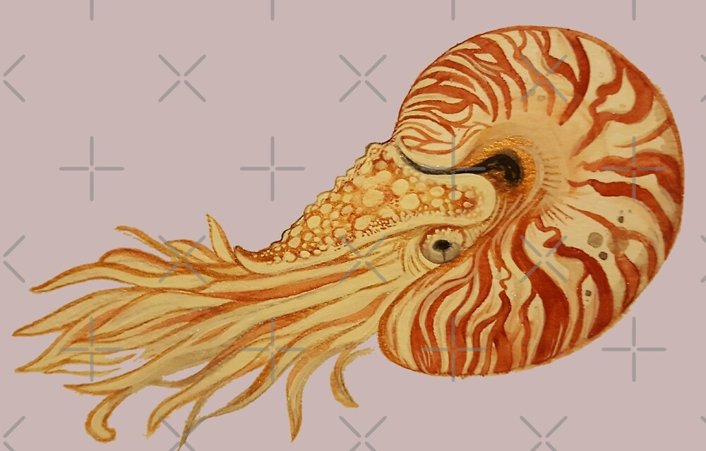 Watercolor Nautilus by Jessica Jacobs