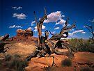 Dead Branch in Canyonland NP by Daniel H Chui