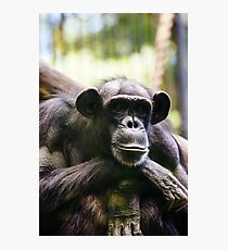 Thinking Chimp Photographic Print