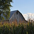 Barn and corn field at dusk by mltrue