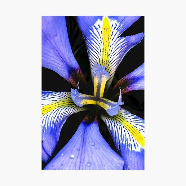 Winter Bulb Photographic Print