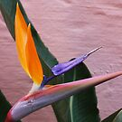 Single bloom strelitzia  by richeriley