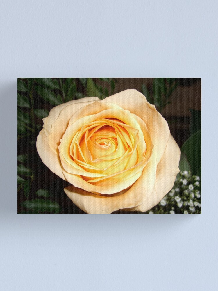 Alternate view of Only a Rose, Vancouver, BC Canvas Print
