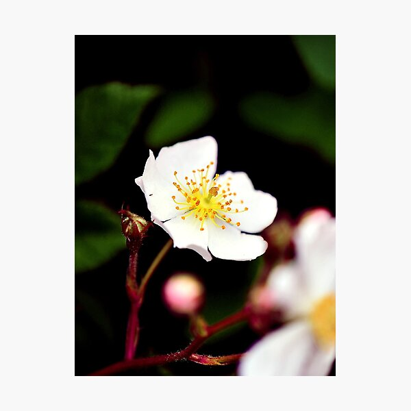 Small Flowers Photographic Print