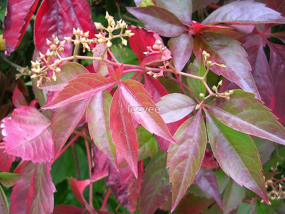 Coloured Foliage by lezvee