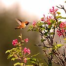 Kolibri und rote blühende Johannisbeere von Peggy Collins