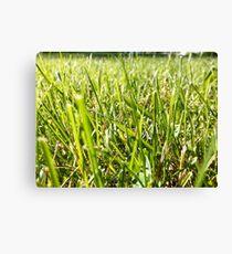 Green Grass Canvas Print