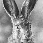 Hare Today, Gone Tomorrow by Sami Thorpe