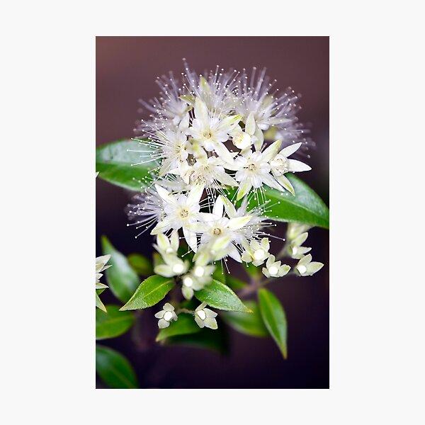 Flower burst Photographic Print