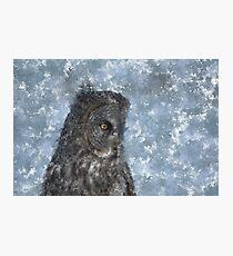 Contemplation - Great Grey Owl Portrait Photographic Print