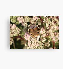 Buckeye Butterfly Macro Canvas Print