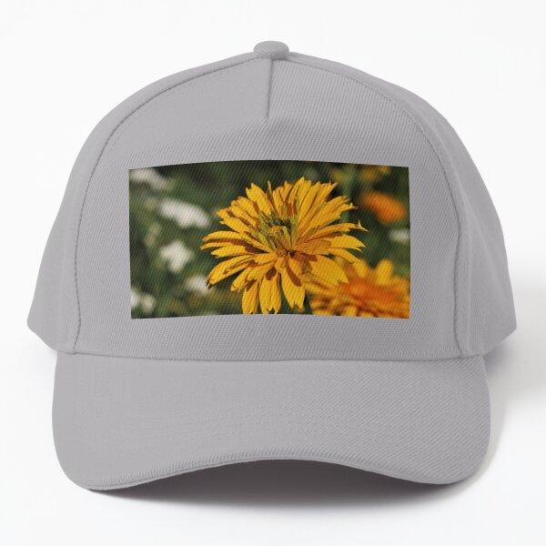 Venus False Sunflower (Heliopsis helianthoides 'Venus') Baseball Cap