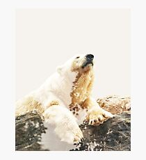 Bear a Charmed Life #redbubble #lifestyle Photographic Print