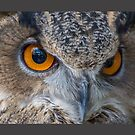 Owl Eyes by CarolColaianni