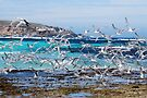 'Terns in flight' by Ian Berry