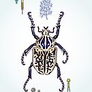 Happy Goliath beetle by smalldrawing