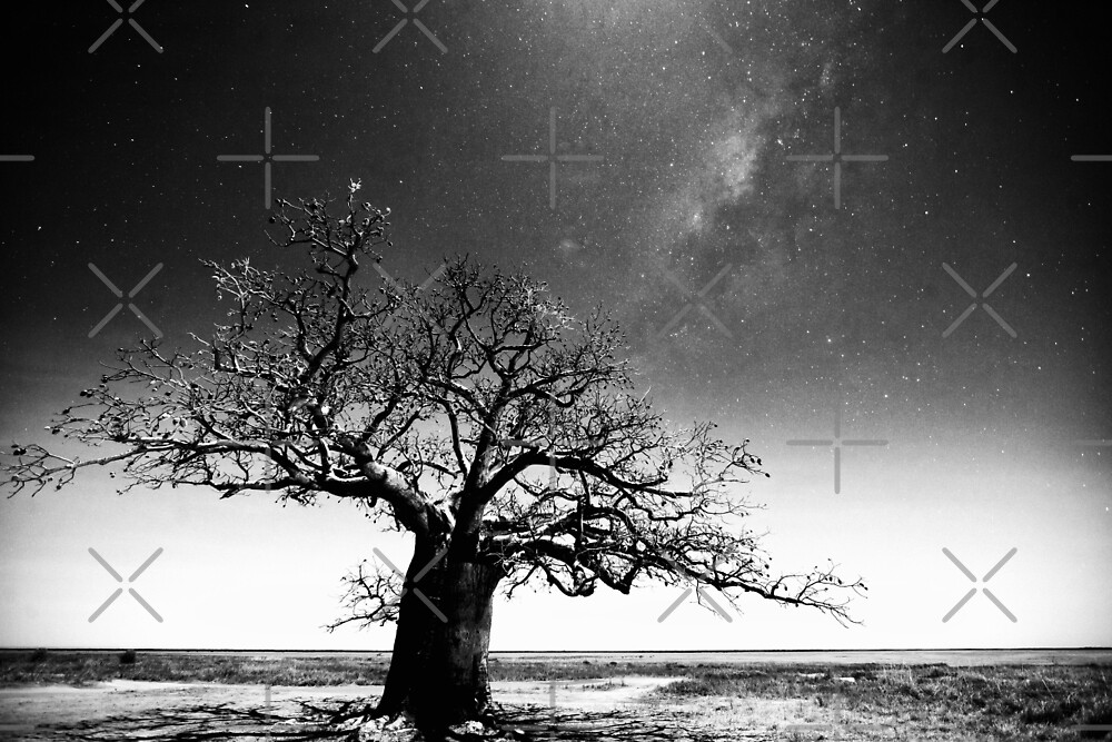Dinner tree constellations by Mel Brackstone