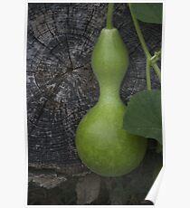 Garden Gourd Poster