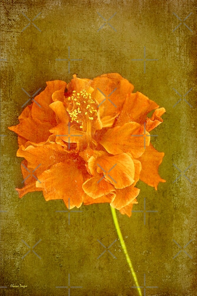 Orange Hibiscus by Elaine Teague