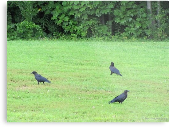 Dagnabbit!! I think The Early Bird got here first! by Jean Gregory  Evans