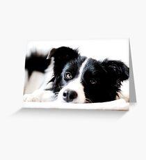 border collie Greeting Card