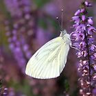 White on Purple by Jo Nijenhuis