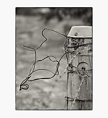 Curly Photographic Print