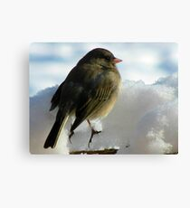 Too Cold To Tweet Canvas Print