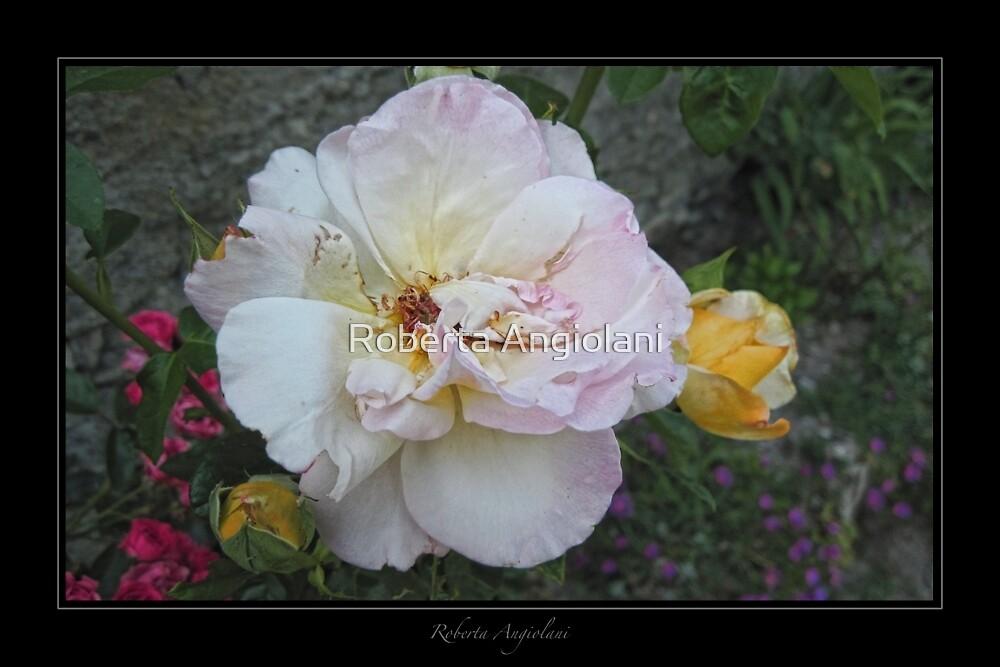 Rose (Piedmont) by Roberta Angiolani