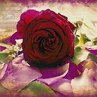 They are not long the days of wine and roses by Amar-Images