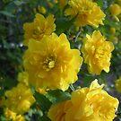 Yellow Flowers 0701 by JBonnetteArt